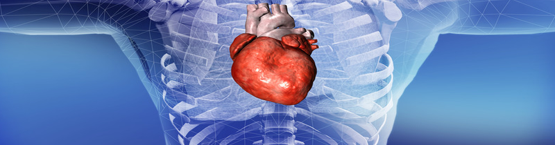 Heart Sifu