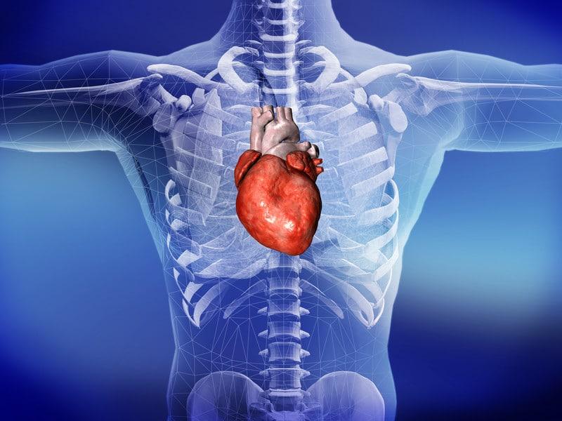HEART CARDIOVASCULAR HEALTH